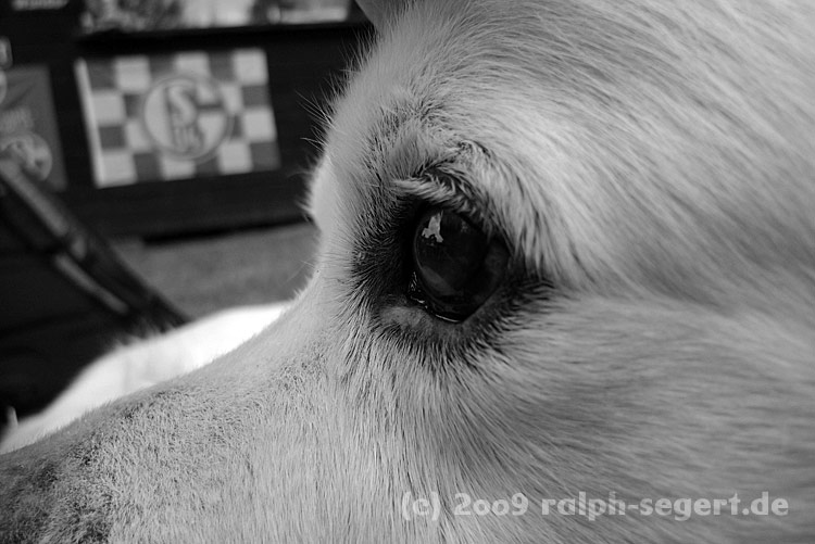 Hund mit Brötchenblick